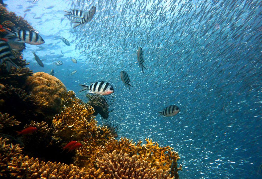La recherche publique au chevet des océans