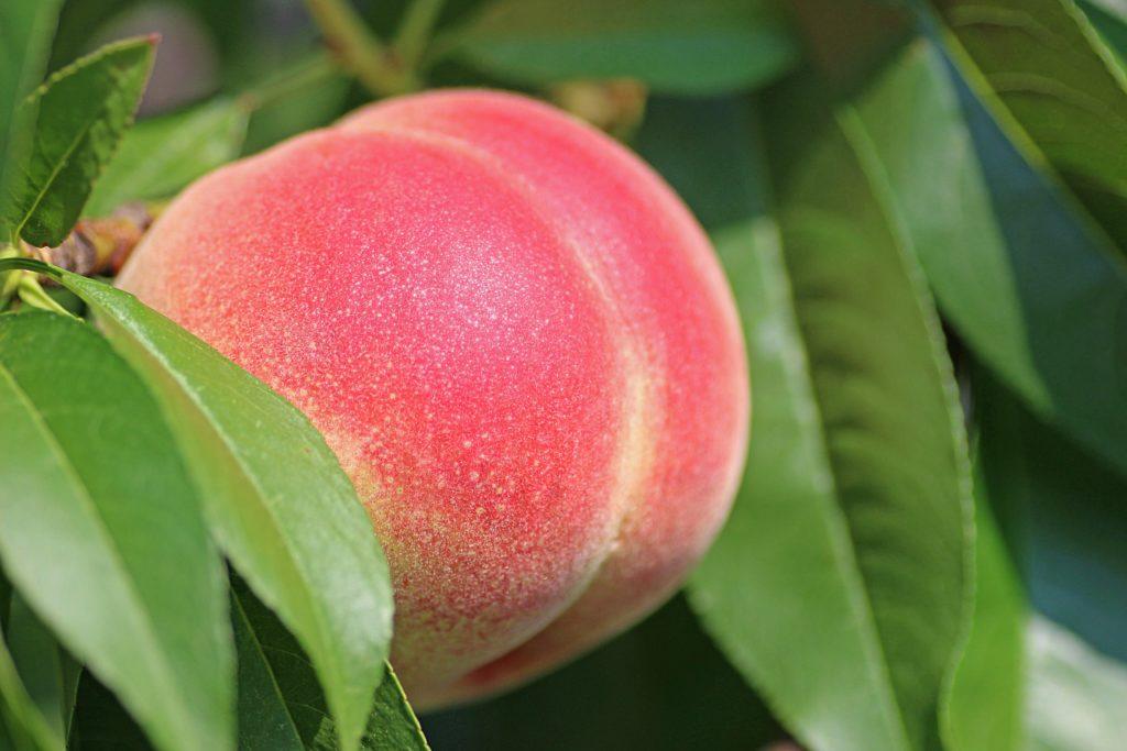 La vente de fruits et légumes au prix juste est annulée