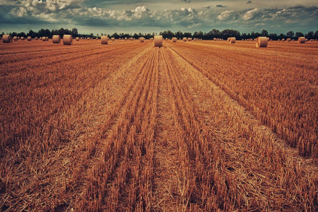 La production agricole victime du réchauffement climatique